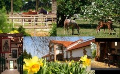 l with socializing with the horses! Three days for the whole family at the estate Visnjic